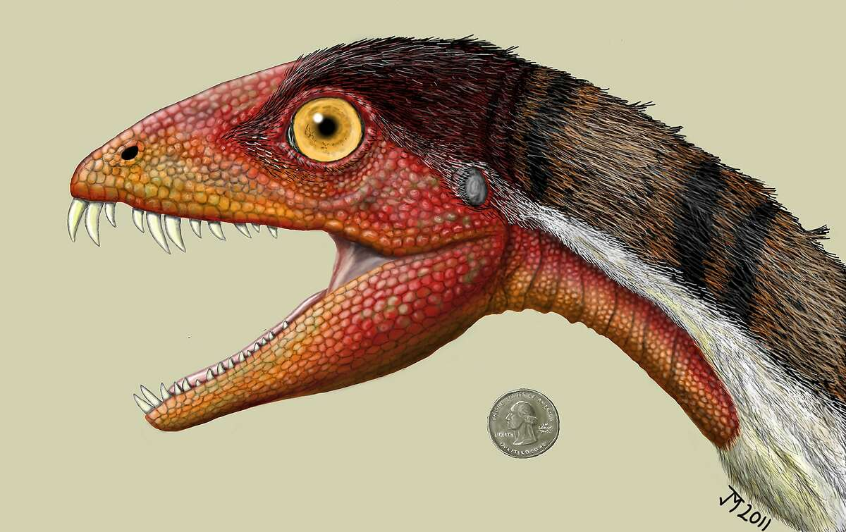 This rendering of Daemonosaurus chauliodus shows its size relative to an American quarter. The species name chauliodus is derived from the Greek word for