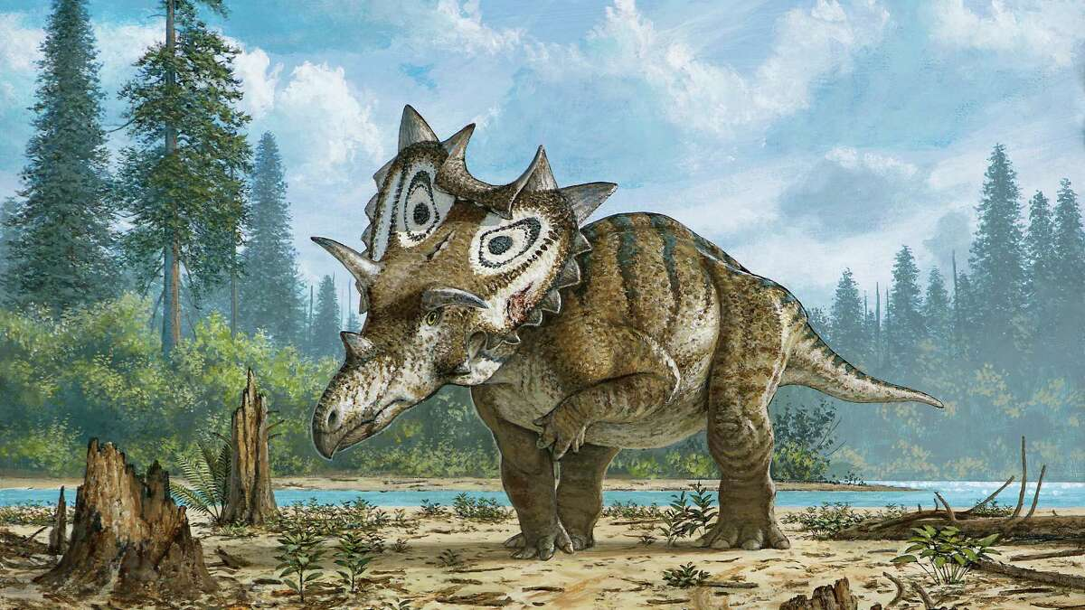 Not so slow Recent scholarship contradicts the notion that dinosaurs were just camo-colored dullards. They were more likely to resemble this Spiclypeus shipporum from montana.