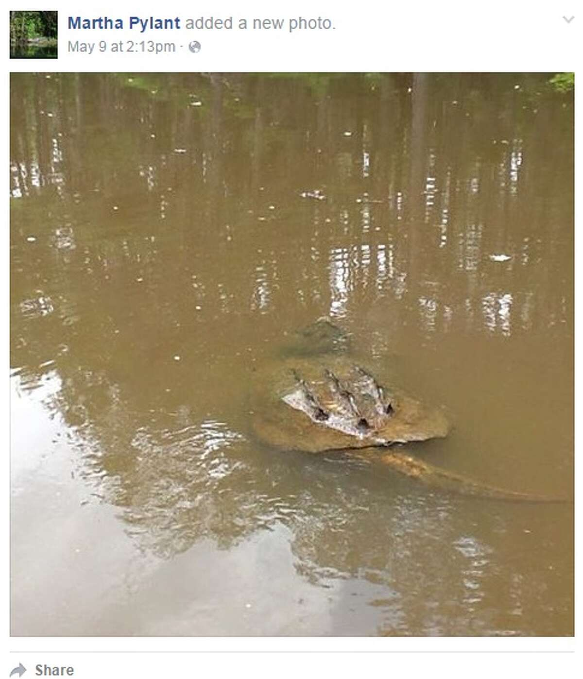 """Caddo Lake, in East Texas, has been a popular spot for """"monster"""" turtle sightings throughout May 2016, according to multiple social media posts."""