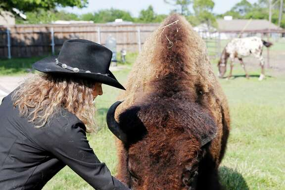 Karen Schoeve pets Bullet, her bison, at her home. Schoeve has recently found a new home for Bullet — but she can visit her any time.
