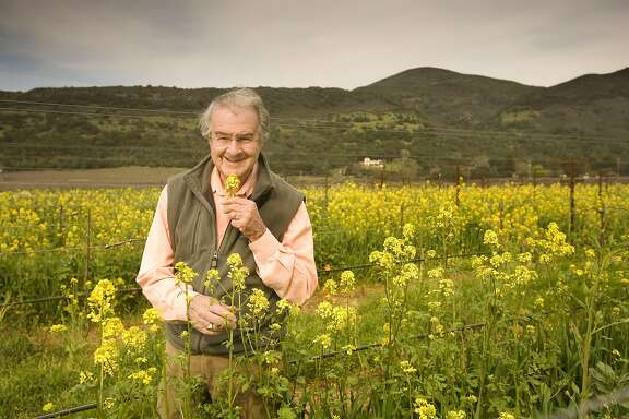 Warren Winiarski, recently sold his Stag's Leap Winery Cellars for $185 million and won the Judgment of Paris in 1976. He is now in semi-retirement, but still active in the vineyard. Photo of Warren, sniffing mustard green flowers in his Arcadia Vineyard that was not part of the sale and kept for himself. This is Block 1 growing Chardonnay. Craig Lee / The Chronicle