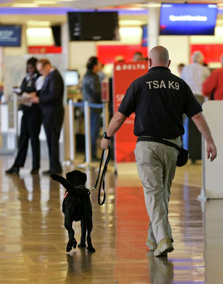 A Transportation Security Administration K9 official walks with a security dog, Thursday, May 19, 2016 through a ticketing area at Seattle-Tacoma International Airport in Seattle. (AP Photo/Ted S. Warren) ORG XMIT: WATW102 Photo: Ted S. Warren / Copyright 2016 The Associated Press. All rights reserved. This m