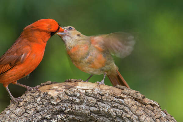 Bird parents lay the groundwork to become empty nesters