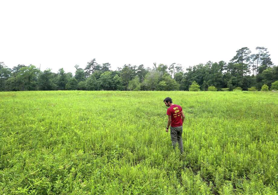 Chris Garza, an applied ecologist at the Houston Arboretum and Nature Center, looks for bees in the center's meadow area, Friday, May 13, 2016, in Houston. ( Jon Shapley / Houston Chronicle ) Photo: Jon Shapley, Staff / © 2015  Houston Chronicle