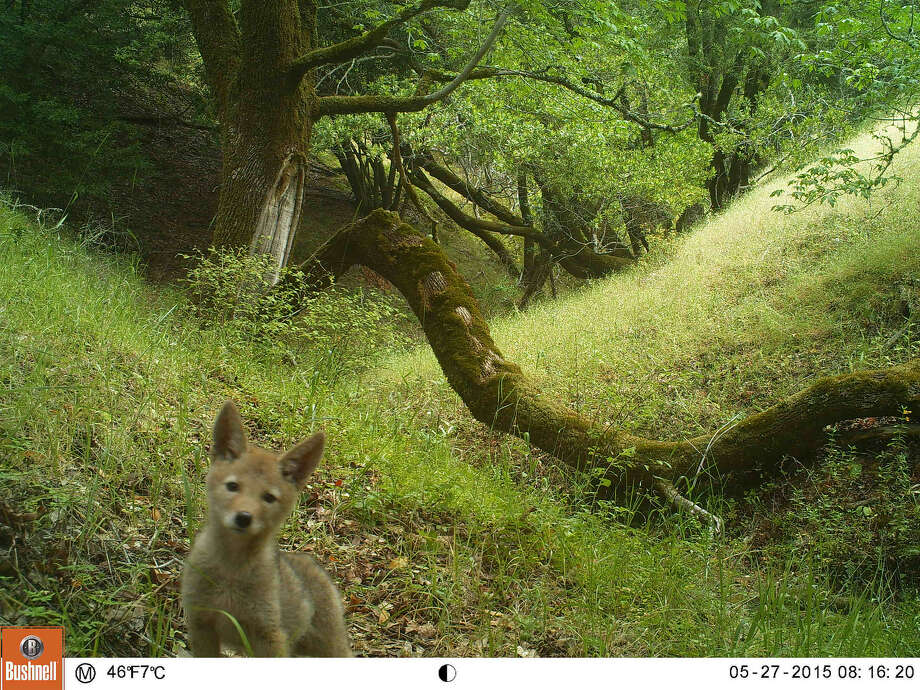 Get a close up peek at the wildlife of Mt. Tam