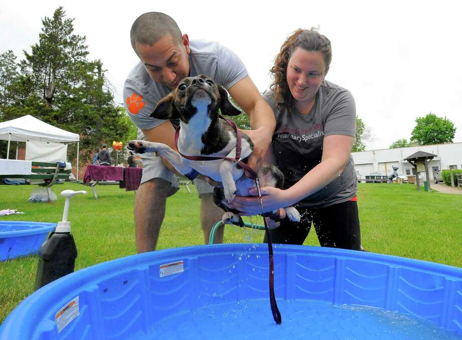 Reese, a 10-month-old Boston Beagle mix attempts a slippery escape from a doggie wash by volunteers Matt Quinones and Emma Wiegand, both of Stamford during the 3rd Annual Doggy Day Plaooza at the Stamford Dog Park on Saturday, May 21, 2016. K-9 participants were pampered with a doggie wash, photo booth and treats. The fundraiser was made possible by the generous donations of sponsors that included Cornell University Veterinarian Specialists, Ry's Ruffery, The Dog Nannies and Co., Blue Buffalo, K9 203 Dog Training, Conair Pet and Stamford Subaru. Photo: Matthew Brown / Hearst Connecticut Media / Stamford Advocate
