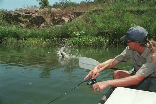 A chugger-style topwater used near cover along the Llano River drew this fierce strike from a hefty largemouth bass. May and June produce some of the year's best topwater fishing for Texas' bass anglers.