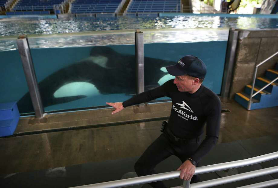 At SeaWorld San Antonio, five dolphins, whales and sea lions have died from infections since May 2014 and another three animals have died from inflammatory diseases.  Photo: Bob Owen, Staff / ©2016 San Antonio Express-News