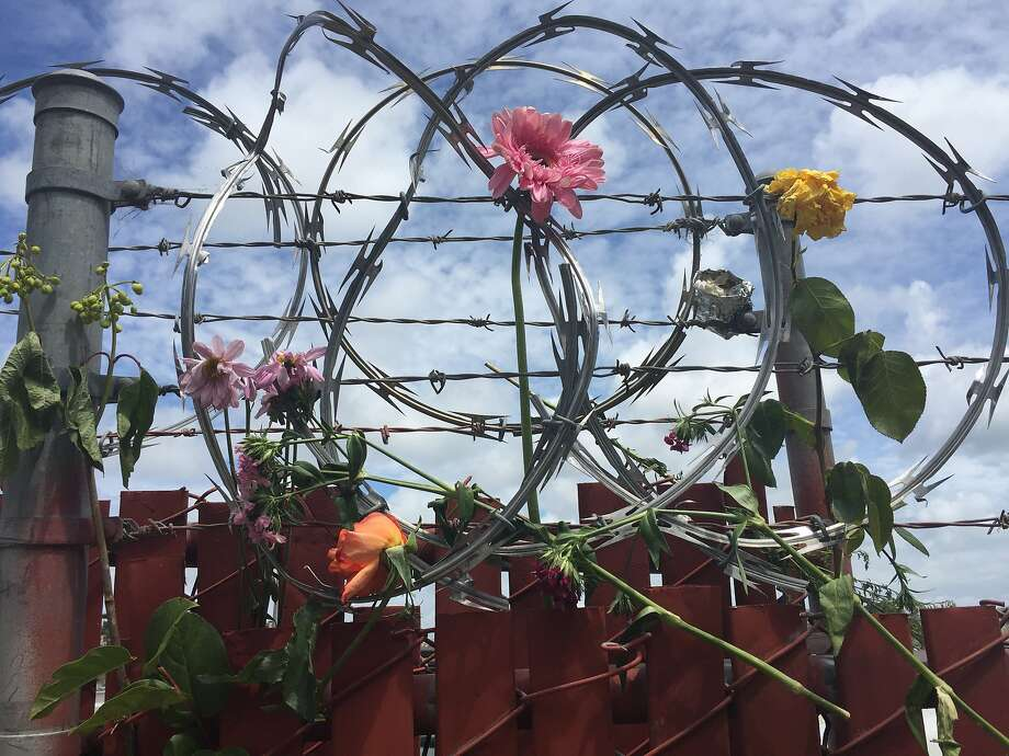 Vigil attendees wove flowers into a barbed wire fence where Jessica Williams, 29, crashed an allegedly stolen car into a utility truck before she was shot by a San Francisco police sergeant on May 19, 2016. Photo: Kimberly Veklerov