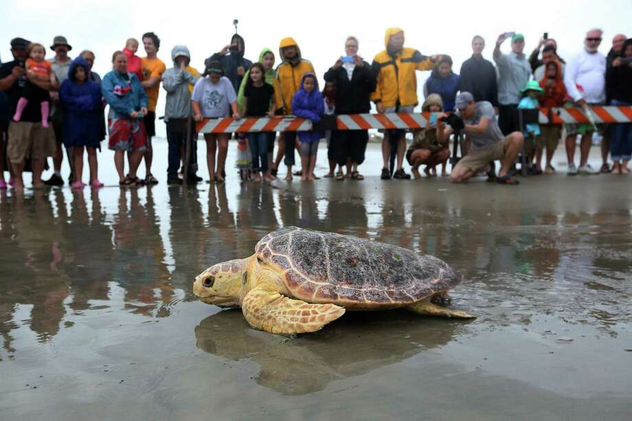 Sea turtle recuperating after being trampled, beaten by selfie-taking tourists