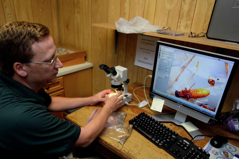 Dr. Bart Foster, an entomologist at Bill Clark Pest Control, shows termites under a microscope on Thursday.  Photo taken Thursday 5/19/16 Ryan Pelham/The Enterprise Photo: Ryan Pelham / ©2016 The Beaumont Enterprise/Ryan Pelham