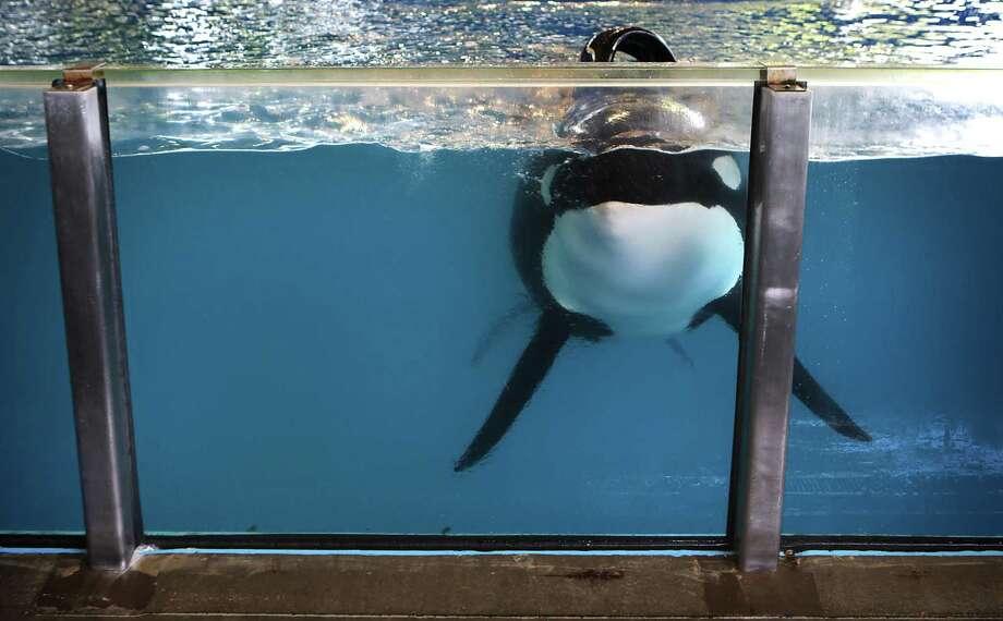 SeaWorld Entertainment reports second-quarter drop in attendance