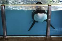 SeaWorld Entertainment Corp. saw a 15 percent jump in attendance during the first three months of 2018. But the Orlando company still posted a $62.8 million loss for the period, despite revenue gains.