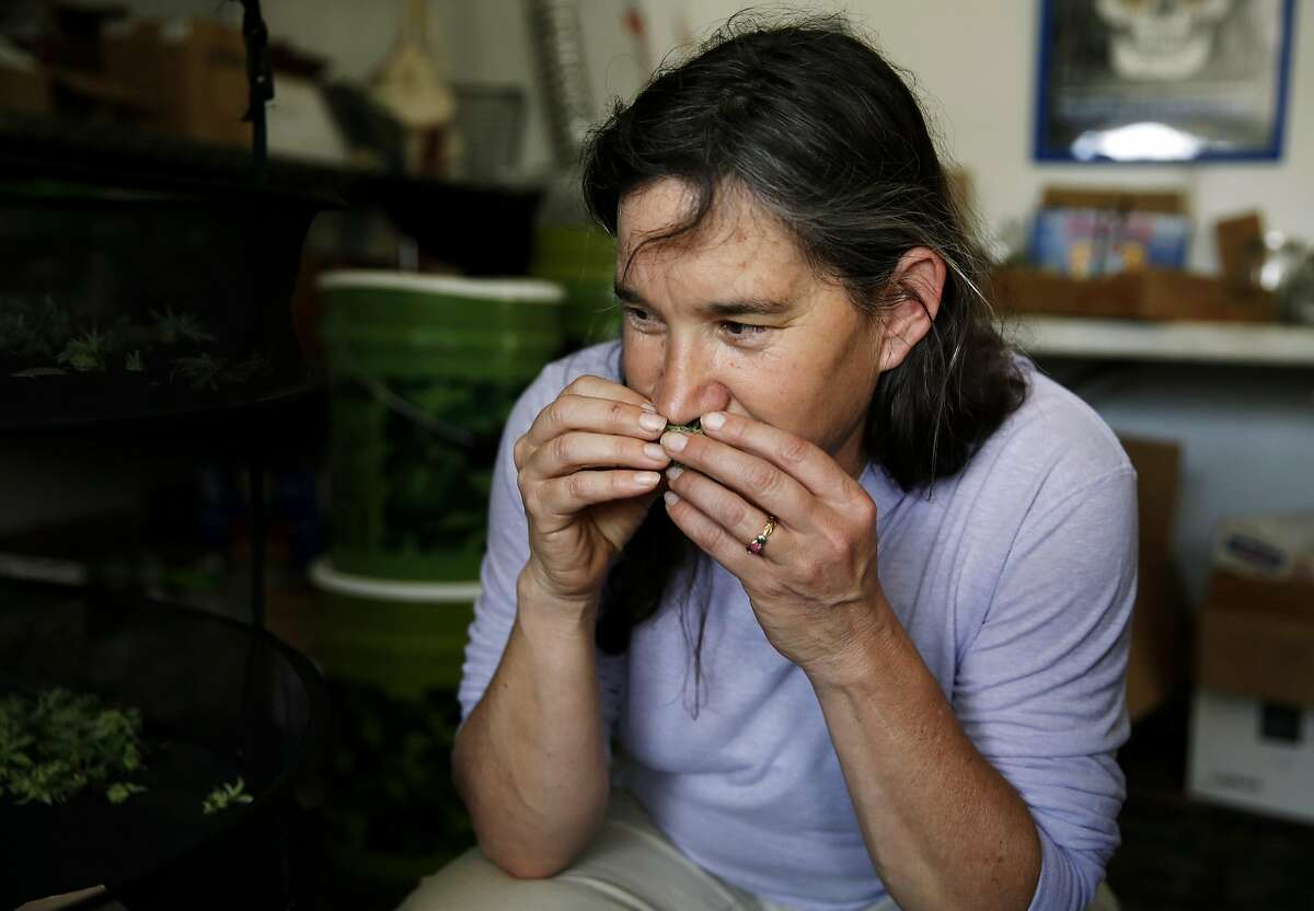 Marijuana grower Sunshine Johnston of Sunboldt Grown smells a drying bud at her farm in Redcrest, California, on Tuesday, May 10, 2016.