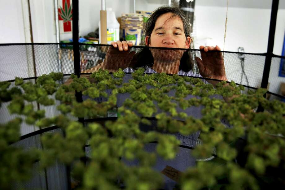 Marijuana grower Sunshine Johnston of Sunboldt Grown peers into a bud drying rack at her farm in Redcrest, California, on Tuesday, May 10, 2016. Photo: Connor Radnovich, The Chronicle