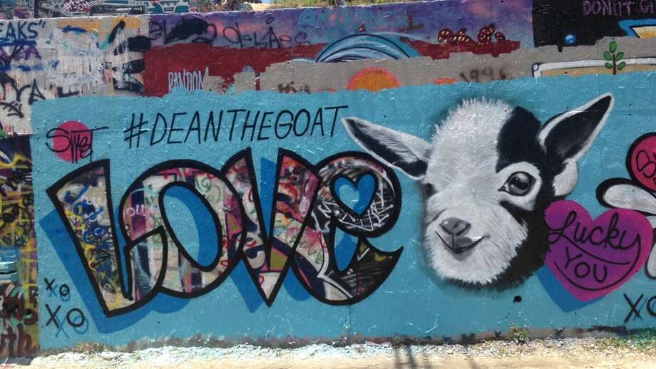 #DeanTheGoat Photo: Matt Levin / Houston Chronicle