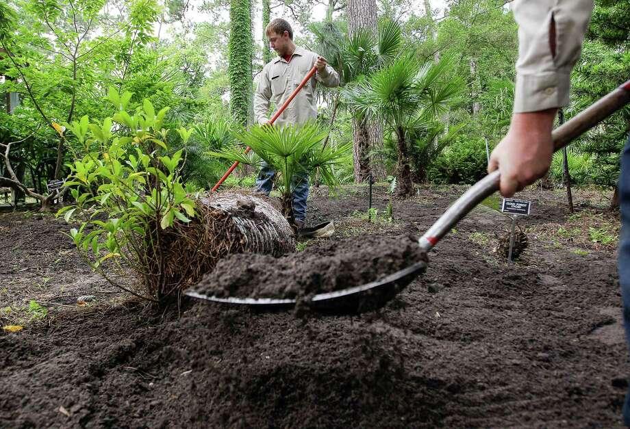 Garden caretakers Cole Tipton, left, and Tyler McAndrews add compost to the Prehistoric Gardens at Mercer Botanic Gardens. Photo: Elizabeth Conley, Staff / © 2016 Houston Chronicle