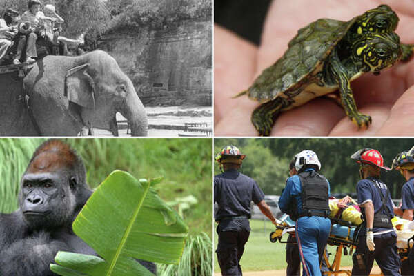 21 wild facts and characters behind the historical San Antonio Zoo