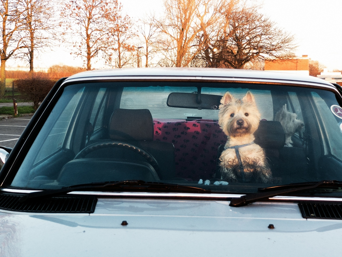 Dog In Parked Car Law California