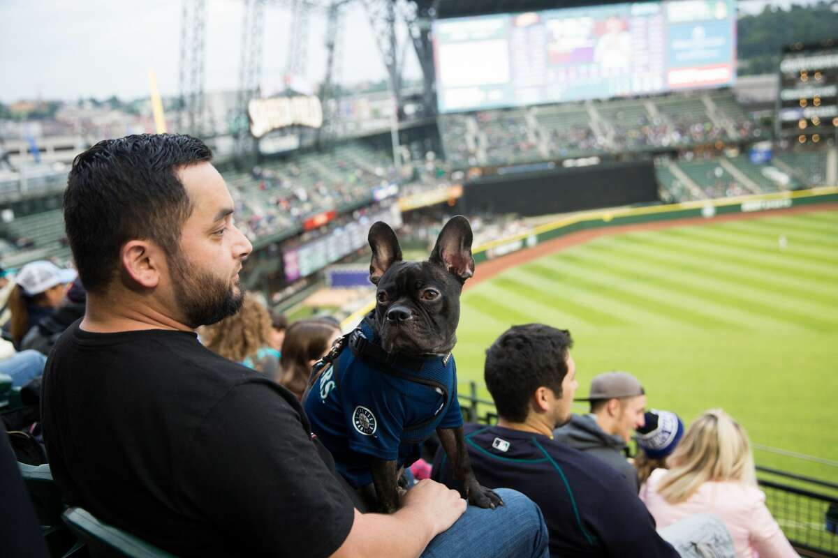Watch the Mariners lose play: We know it's already been a disappointing season for M's fans, but there's nothing quite like a night at the ballgame (particularly during the 'Bark at the Park' nights when you can bring your pup with you). Plus there are hot dogs!