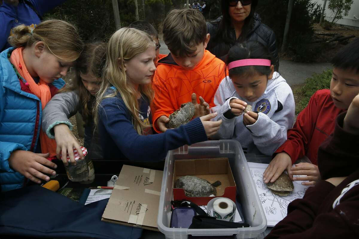 Students from North Hillsboro School explore the Western Pond Turtle display during the opening of the San Francisco Zoological Society-Yosemite National Park Conservation and Recovery Center at the San Francisco Zoo on Wed. May 25, 2016, in San Francisco, California. The center has raised over 400 endangered red-legged frogs which will be released inside Yosemite.