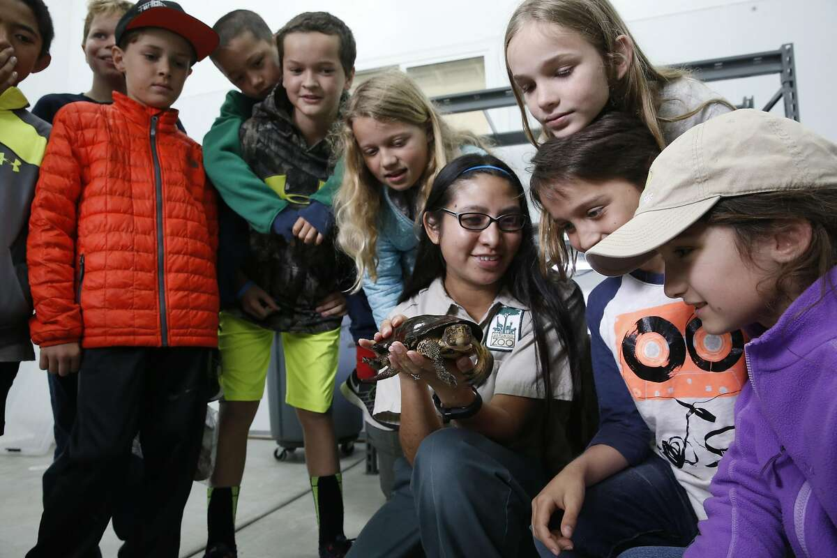 Zoo keeper Ariel Berwick displays a Western Pond Turtle for the students of North Hillsboro School at the San Francisco Zoological Society-Yosemite National Park Conservation and Recovery Center at the San Francisco Zoo on Wed. May 25, 2016, in San Francisco, California. The center has raised over 400 endangered red-legged frogs which will be released inside Yosemite.