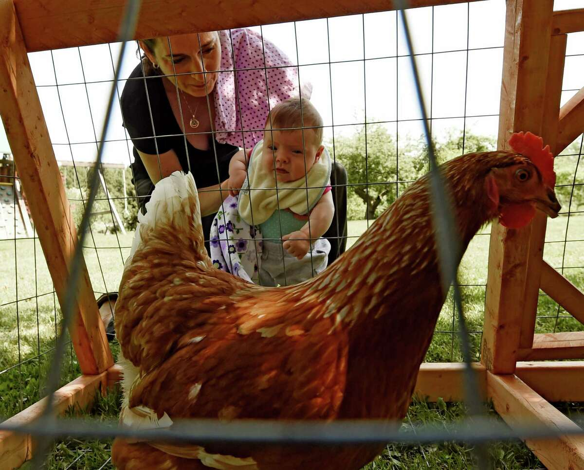 Neighbor Ann Hymes and her niece, 2 month old Emily Blom, enjoy their the Rent The Chicken next door chicken coop Wednesday morning, May 25, 2016, in Loudonville, N.Y. (Skip Dickstein/Times Union)