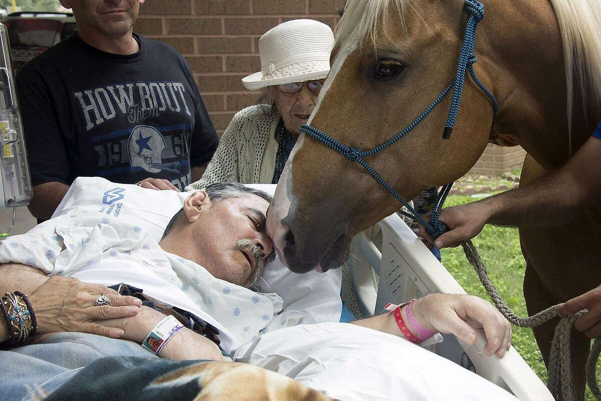 Last wishes come in many forms. Some are more unusual than others. Roberto Gonzalez with one of his horses in San Antonio. The paralyzed Vietnam veteran's wish of seeing his horses was granted by the Audie L. Murphy Memorial Veterans Hospital and he spent some time with two of his horses outside of the hospital where he was a patient. Gonzalez died Monday.