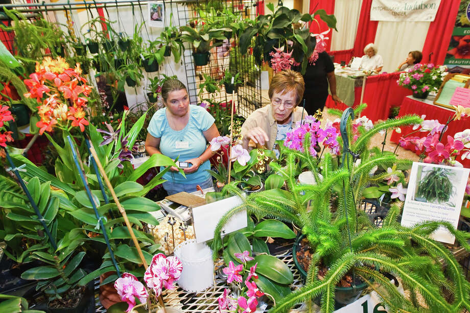 Gardeners who come to the 19th annual Festival of Flowers at the Alzafar Shrine Temple today will find a wealth of flowers and gardening information. Photo: Express-News File Photo / Prime Time Newspapers 2010