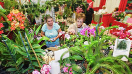Gardeners who come to the 19th annual Festival of Flowers at the Alzafar Shrine Temple today will find a wealth of flowers and gardening information.