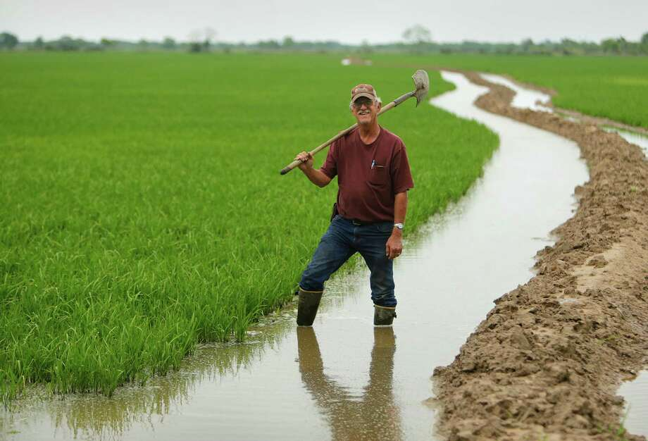 """Rice farmer Wayne England has irrigation canals running through his fields near Brookshire. """"You make a living, but you don't have a pension,"""" England said of his profession. """"You have what you make. It's hard work."""" ,  Photo: Mark Mulligan, Staff / © 2016 Houston Chronicle"""