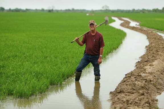 "Rice farmer Wayne England has irrigation canals running through his fields near Brookshire. ""You make a living, but you don't have a pension,"" England said of his profession. ""You have what you make. It's hard work."" ,"
