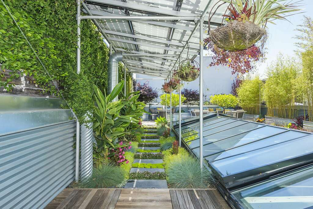 Succulents and drought tolerant grasses sprout from a garden shaded by the home's solar panels. Photo: Olga Soboleva / Vanguard Properties