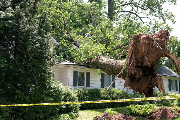 "Tom Pellegrin, president of Third Coast Builders, recommends making sure trees are pruned properly, as ""most storm damage is caused by large limbs breaking and damaging the structure or the roof."""