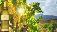 Wine of the Week: Martin Ray Sauvignon Blanc - Photo