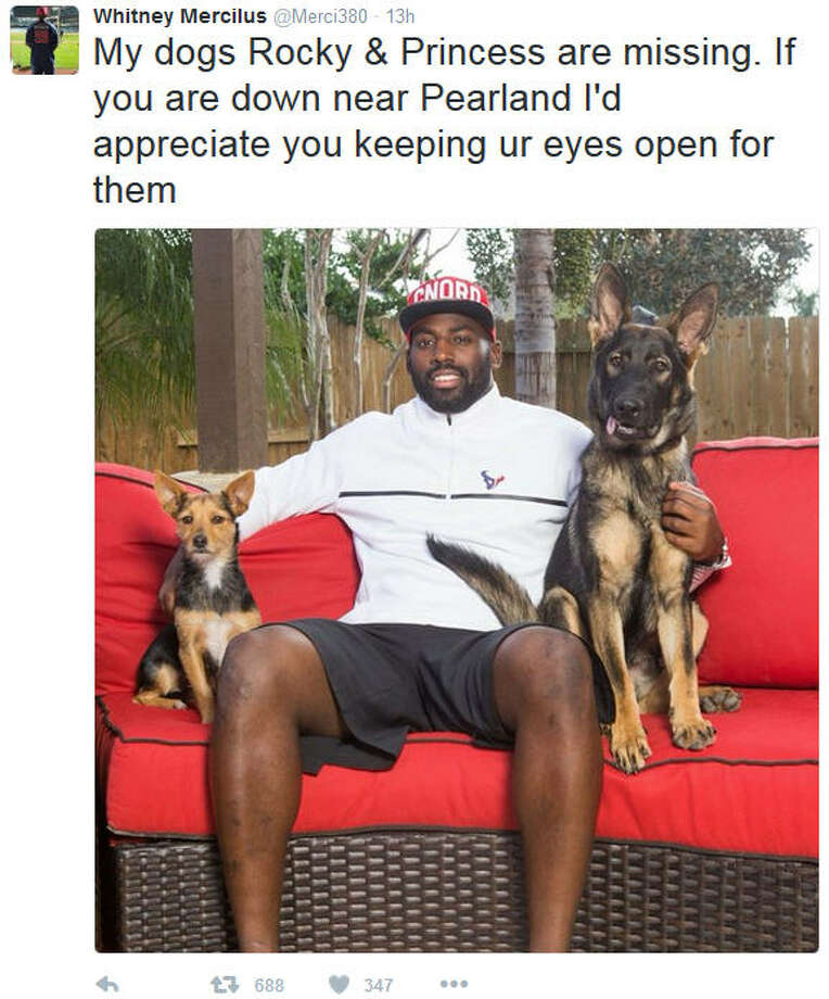 Texans linebacker Whitney Mercilus' lost dogs have been found