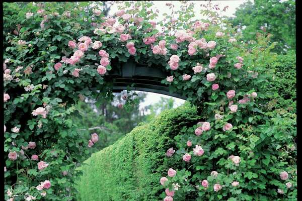 """Carolyne Roehm loves roses and peonies in her garden, where Annie, her dog, is a constant presence. Her latest book, """"Carolyne Roehm at Home in the Garden,"""" tours the gardens of her Connecticut estate, Weatherstone."""