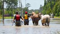 6 horses rescued from flood water in NW Harris County - Photo