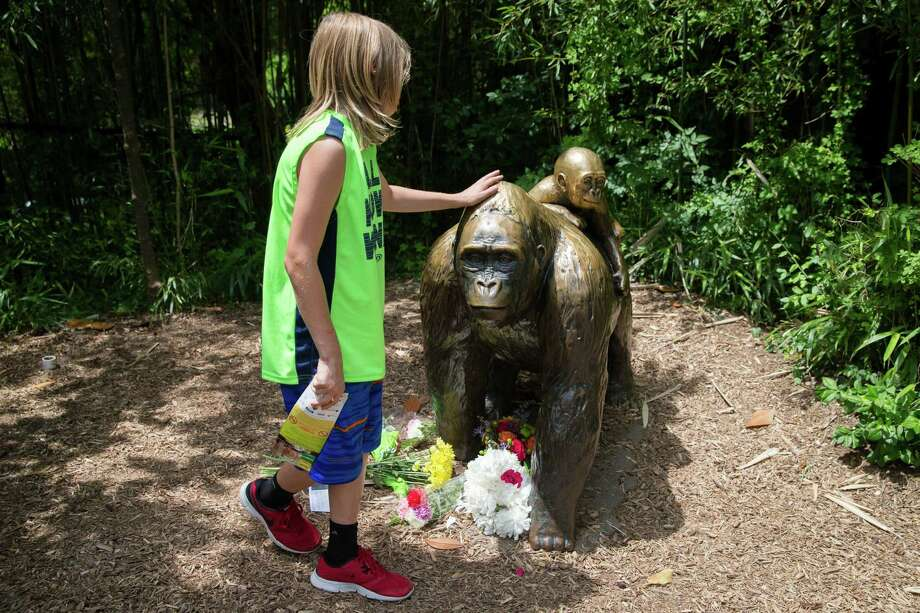 Corsicana residents are now debating their own gorilla statue, which was in a cage and believed by some to be racially insensitive. At the Cincinnati Zoo & Botannical Garden, people flocked to this statue after another controversy -- when a special zoo response team shot and killed Harambe, a 17-year-old gorilla, that grabbed and dragged a 4-year-old boy who fell into the gorilla exhibit moat. (AP Photo/John Minchillo) Photo: John Minchillo, STF / AP