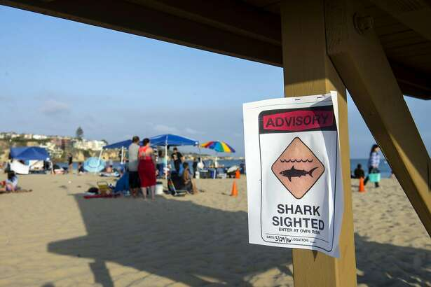 A possible shark sighting at Corona del Mar State Beach closes the shoreline on Sunday, May 29, 2016.  Lifeguards shut down the beach on Sunday after a swimmer was pulled injured from the water with bite marks in a possible shark attack, authorities said.(Cindy Yamanaka/The Orange County Register via AP)