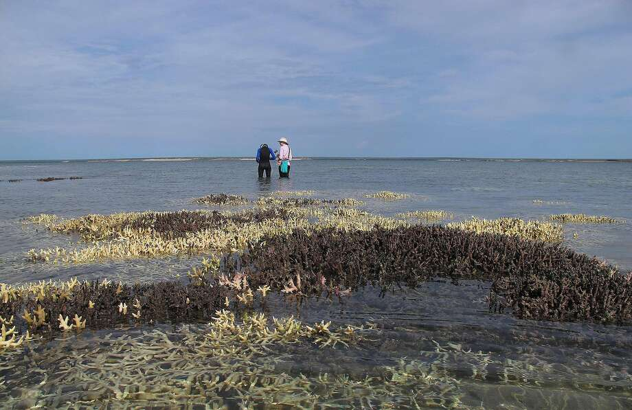 "TOPSHOT - An undated handout photo received on May 30, 2016, shows dead coral in shallow waters at Cygnet Bay in Western Australia.         At least 35 percent of corals in the northern and central regions of Australia's Great Barrier Reef are dead or dying from a mass bleaching event, scientists said on May 30, 2016.  The assessment was made after months of aerial and underwater surveys after the worst bleaching in recorded history first became evident in March as sea temperatures warm. / AFP PHOTO / STR / XGTY  ----EDITORS NOTE ----RESTRICTED TO EDITORIAL USE MANDATORY CREDIT "" AFP PHOTO / JAMES COOK UNIVERSITY / CHRIS CORNWALL"" NO MARKETING NO ADVERTISING CAMPAIGNS - DISTRIBUTED AS A SERVICE TO CLIENTS - NO ARCHIVESSTR/AFP/Getty Images Photo: STR, AFP/Getty Images"