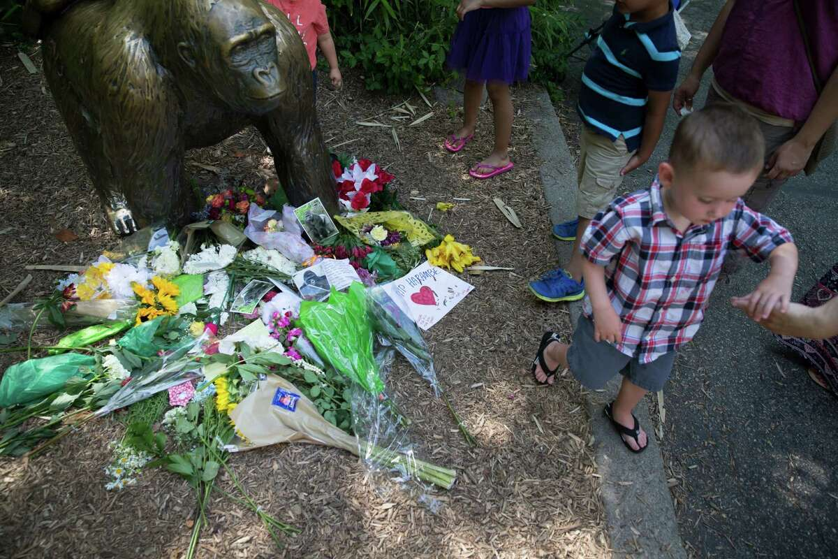 A boy is led away after putting flowers beside a statue of a gorilla outside the shuttered Gorilla World exhibit at the Cincinnati Zoo & Botanical Garden, Monday, May 30, 2016, in Cincinnati. A gorilla named Harambe was killed by a special zoo response team on Saturday after a 4-year-old boy slipped into an exhibit and it was concluded his life was in danger. (AP Photo/John Minchillo) ORG XMIT: OHJM123