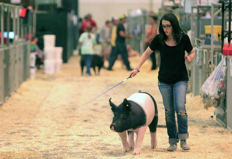 The Houston Livestock Show and Rodeo has committed nearly $26 million to scholarhips and educational initiatives this year. In this file photo, Haley Lam exercises her pig near midnight inside NRG Center. Haley got up at 3 a.m.  to leave her home in Burkburnett to show her pig and a calf at the Houston Livestock Show and Rodeo. ( Mark Mulligan / Houston Chronicle ) Photo: Mark Mulligan, Staff / © 2016 Houston Chronicle