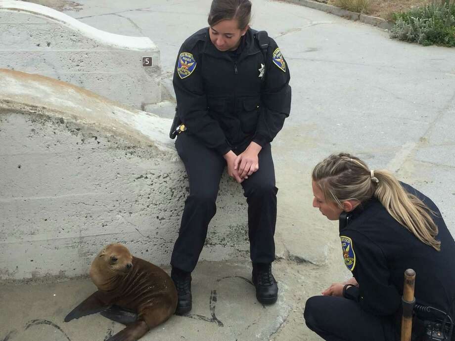 San Francisco police officers stayed overnight with the stranded sea lion pup that they named George Bison