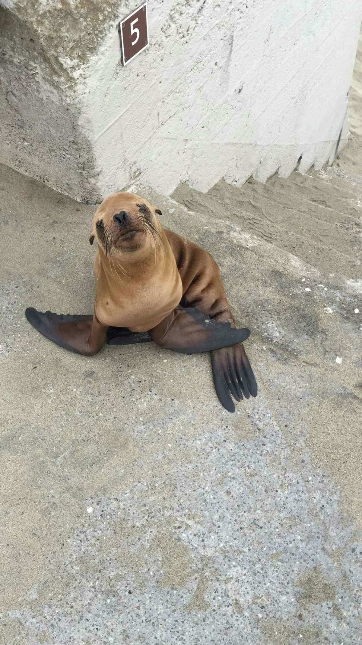 A sea lion pup in San Francisco.