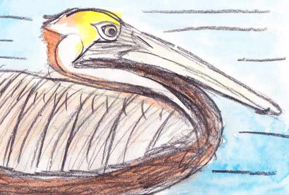 "These illustrations are among ""Olivia?s Birds,""  an exhibit that opens Saturday, June 4, at the Athens Cultural Center. The drawings and paintings of backyard and endangered birds are by young artist and environmentalist Olivia Bouler."