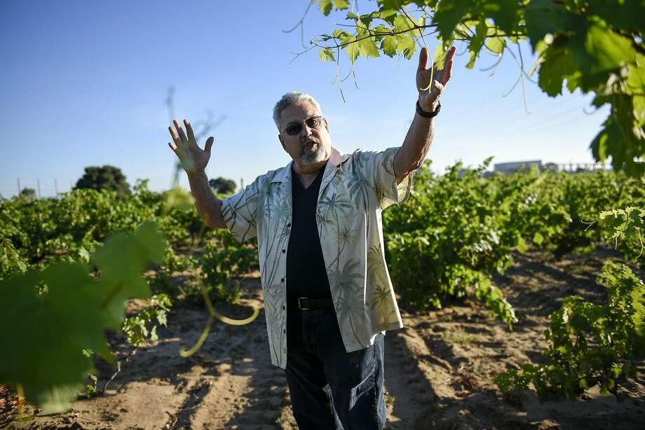 Frank Evangelho in his Evangelho Vineyard in Antioch. Photo: Michael Short, Special To The Chronicle