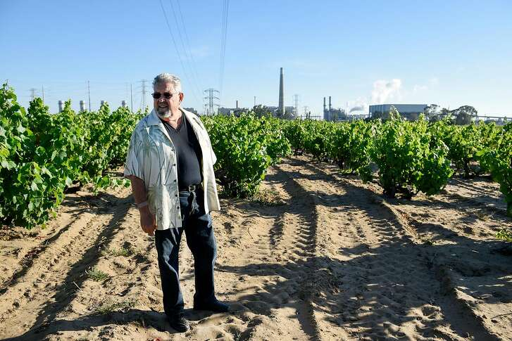A PG&E power plant is seen in the background as Frank Evangelho walks through head trained vines of zinfandel and mourvedre grapes at his Evangelho Vineyard in Antioch, CA Wednesday, June 1st, 2016.