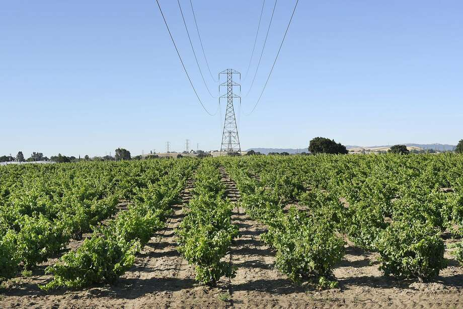 A PG&E overhead power line tower in the the middle of Evangelho Vineyard in Antioch. Photo: Michael Short, Special To The Chronicle