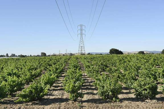 A PG&E overhead power line tower is seen in the the middle of  Evangelho Vineyard in Antioch, CA Wednesday, June 1st, 2016.